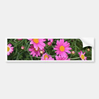 Yellow & pink daisies in flower bumper sticker