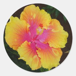 Yellow & Pink Hibiscus Classic Round Sticker
