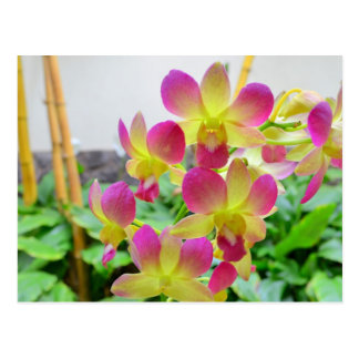 Yellow Pink Orchids Postcard