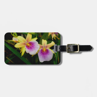 Yellow Pink Purple Miltonia Sunset Orchids Bag Tag
