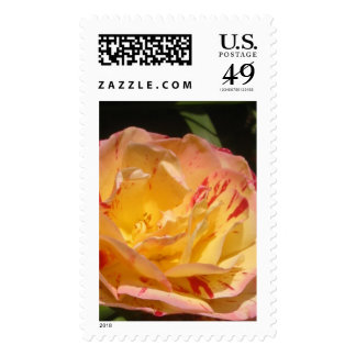 Yellow Pink Rose Twirl Flower Photo Postage Stamps