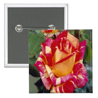 Yellow Pink Roses Button