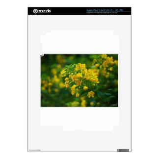 Yellow plum blossom-New Year iPad 3 Skin