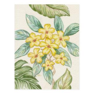 Yellow Plumeria postcard