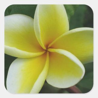 Yellow Plumeria Sticker