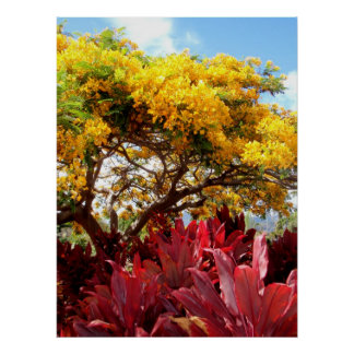 Yellow Poinciana Tree and Red Ti Plants Poster