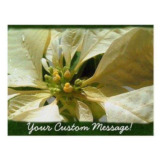 Yellow Poinsettias 1 Postcard