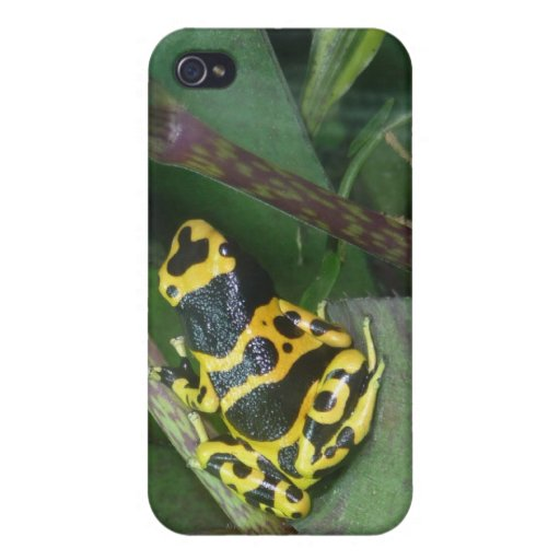 Yellow Poison Dart Arrow Frog Cover For iPhone 4