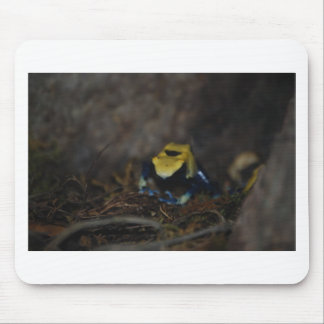 Yellow Poison Dart Frog Mouse Pad