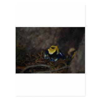 Yellow Poison Dart Frog Postcard