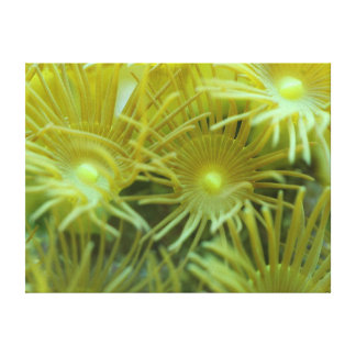 Yellow Polyps - The Reef Collection Canvas Print