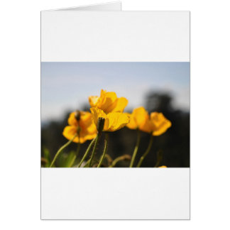 Yellow Poppies Card