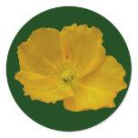 Yellow Poppy Classic Round Sticker
