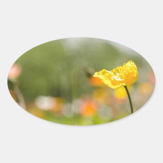 Yellow Poppy Oval Sticker