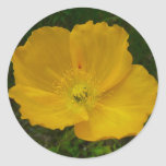 Yellow Poppy Pretty Alaskan Wildflower Classic Round Sticker