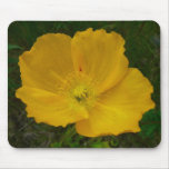 Yellow Poppy Pretty Alaskan Wildflower Mouse Pad