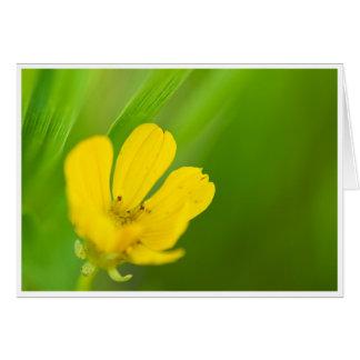 Yellow Prairie Flower Greeting Card