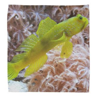 Yellow prawn-goby bandana
