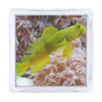 Yellow prawn-goby silver finish lapel pin