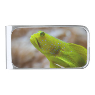 Yellow prawn-goby silver finish money clip