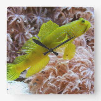 Yellow prawn-goby square wall clock