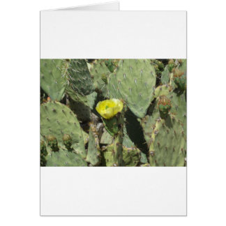Yellow Prickly Pear Blossom Card