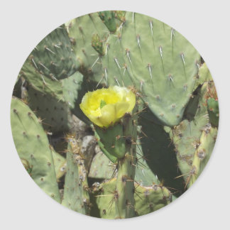 Yellow Prickly Pear Blossom Classic Round Sticker