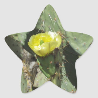 Yellow Prickly Pear Blossom Star Sticker