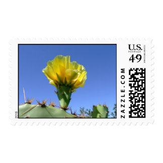 yellow prickly pear cactus flower postage stamp