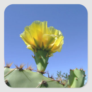 Yellow prickly pear cactus flower square sticker