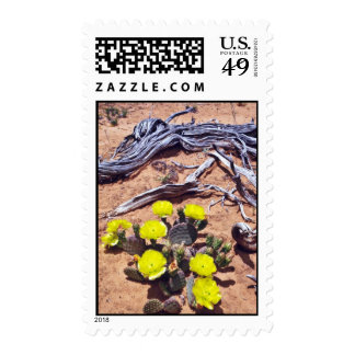 Yellow-Prickly Pear Cactus flowers Postage Stamp