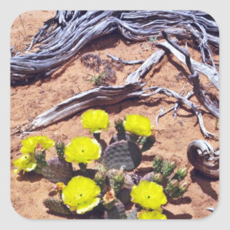 Yellow-Prickly Pear Cactus flowers Square Sticker