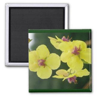 Yellow Primrose Magnet