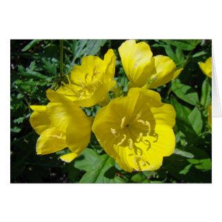 Yellow Primroses - Sundrops Card