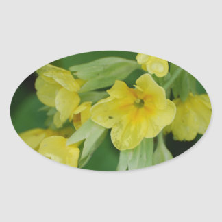 Yellow Primula flowers Oval Sticker