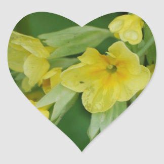 Yellow Primula flowers Heart Sticker