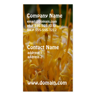 Yellow Protea Business Card Template