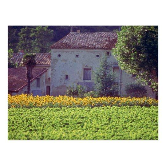 yellow Provencal mas near Carpentras in field of s Postcard