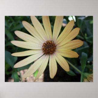 Yellow Rain Daisy Macro Print