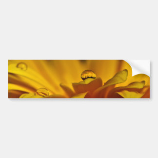 Yellow Rain Kissed Gerbera Bumper Sticker