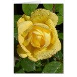 Yellow Rain Rose Cards