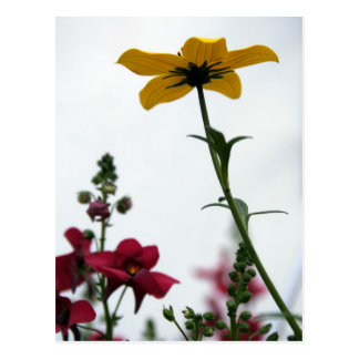 Yellow & Red 1 - Floral Photgraphy Postcard