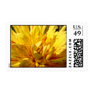 Yellow Red Dahlia Flower postage stamps Florals