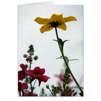 Yellow & Red - Floral Photography Card