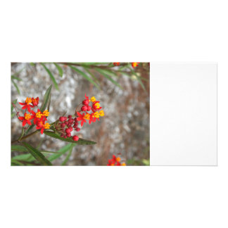 yellow red flower stalk florida plants personalized photo card