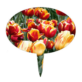 Yellow & red Tulip flowers in bloom 5 Cake Topper