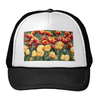 Yellow & red Tulip flowers in bloom 5 Trucker Hat
