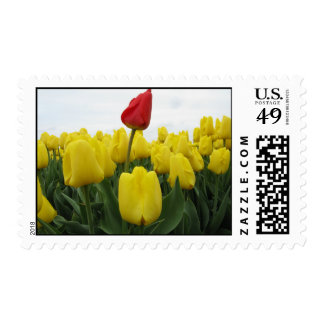 Yellow Red Tulips Flower Postage
