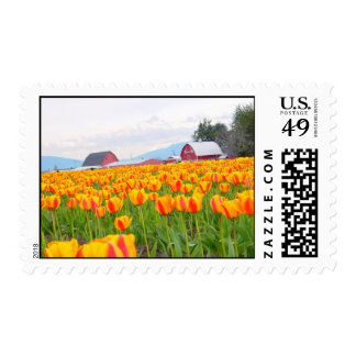Yellow Red Tulips Postage Stamp