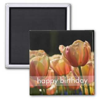Yellow & Red Variegated Tulips DSC0799 2 Inch Square Magnet